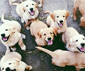 dogs, puppy, and want image