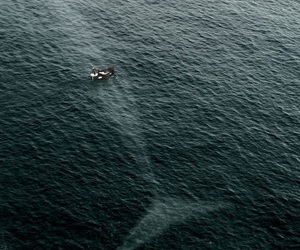 animals, ocean, and whale image