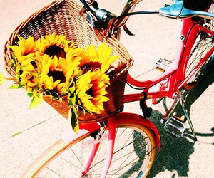 summer, bike, and flowers image