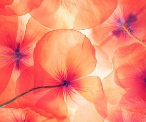 beautiful, sun, and flowers image