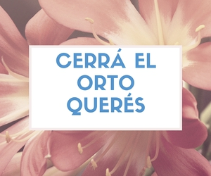 argentina, culo, and frases argentinas image