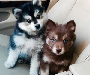 puppy, cuteeee, and cute image