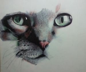 cat, drawing, and beautiful image