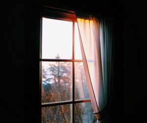 tumblr and window image