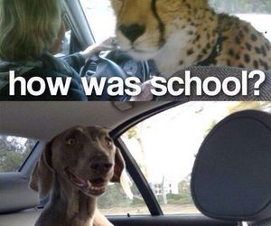 funny, dog, and school image