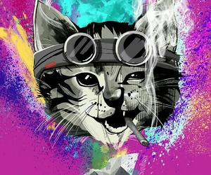 cat, colors, and crazy image