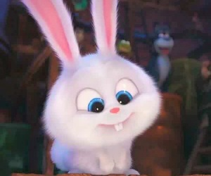 the secret life of pets and rabbit image