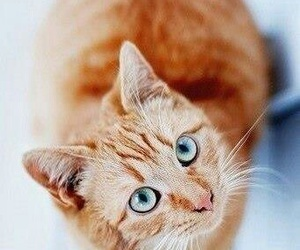cat, blue eyes, and red image