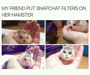 funny, cute, and hamster image