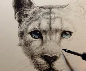 art, animal, and drawing image