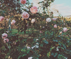 beauty, flowers, and nature image