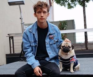 troye sivan, dog, and pug image