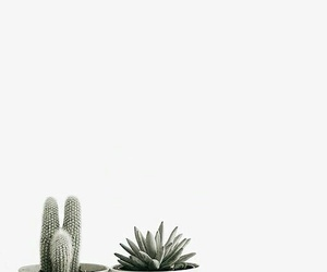 white, cactus, and plants image
