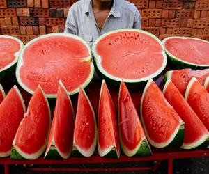 melon and melons image