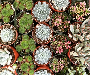 flowers, green, and succulents image