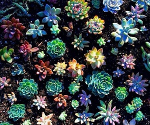 colorful, flowers, and succulents image