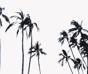 beach, black&white, and summer image