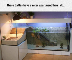 funny, humor, and turtle image