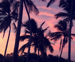 colors, palm trees, and pink image