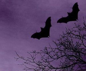 purple, bats, and Halloween image