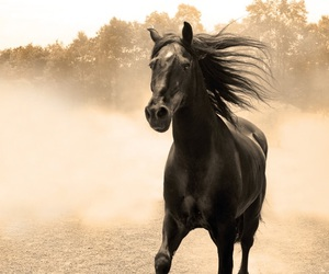 equine, horse, and horses image