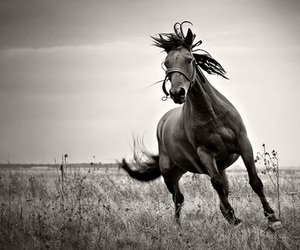 horse, black and white, and photography image