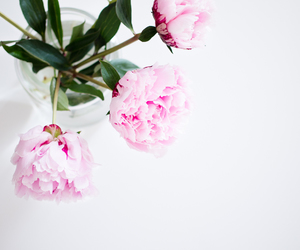 peonies, pink, and beautiful image