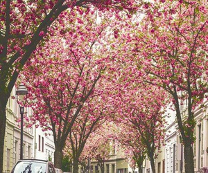 pink, flowers, and spring image