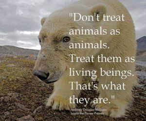 animals, animal rights, and vegetarian image