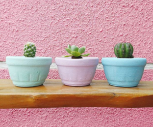 cactus, pastel, and pink image