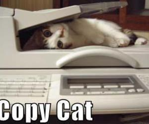 cat, funny, and copy image