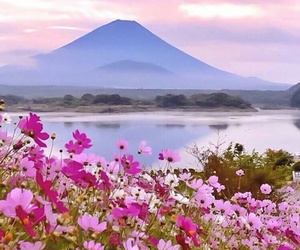 japan, mountain, and flowers image
