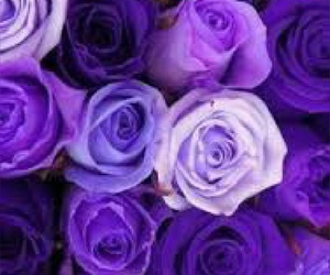 flowers, purple, and summer image