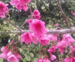 arvore, tree, and cerejeira image