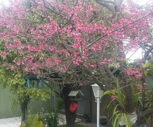 garden, inverno, and cerejeira do japão image