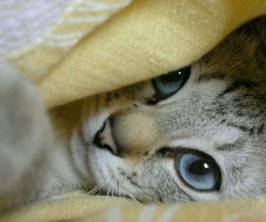 terdensses cat image