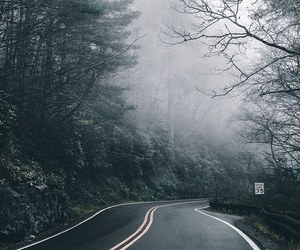 forest, world, and road image