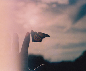 butterfly, photography, and hand image
