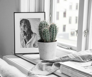 bedroom, simplistic, and cactus image