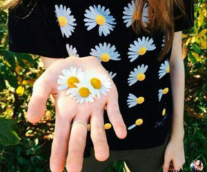 flowers and daisy image