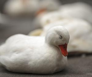 animal, beautiful, and bird image