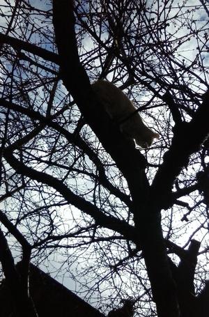 cat nature tree image