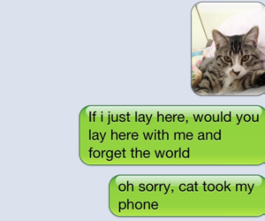 cat, funny, and text image
