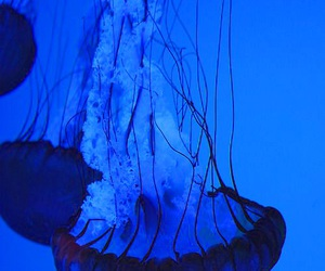 blue, jellyfish, and ocean image