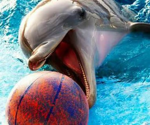 dolphin, animal, and summer image