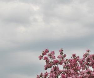 header, pastel, and tumblr image