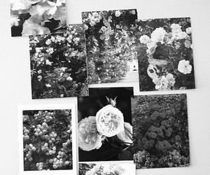 b&w, beautiful, and flowers image