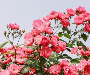 flowers, wallpaper, and girly image