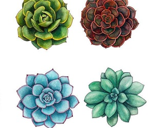 succulents and art image