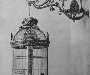 cage, black and white, and birdcage image